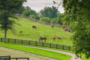 horse farm in AZ